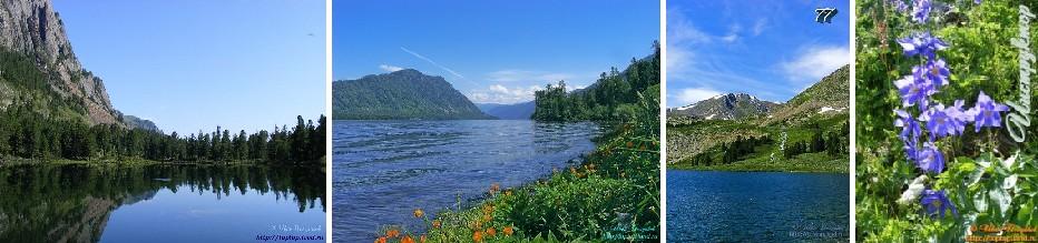 Озеро Уй-Мень. Золотое озеро (Телецкое). Озеро Чевошь. Альпийский луг.  Аквилегия.